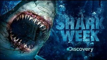 The Shark Week Drinking Game - theChuggernauts.com